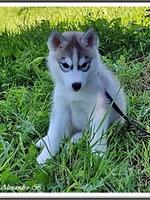 Kira (2 mois)