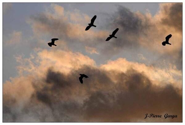 Crépuscules sur le lac de Marcenay...de magnifiques photos de Jean-Pierre Gurga ....