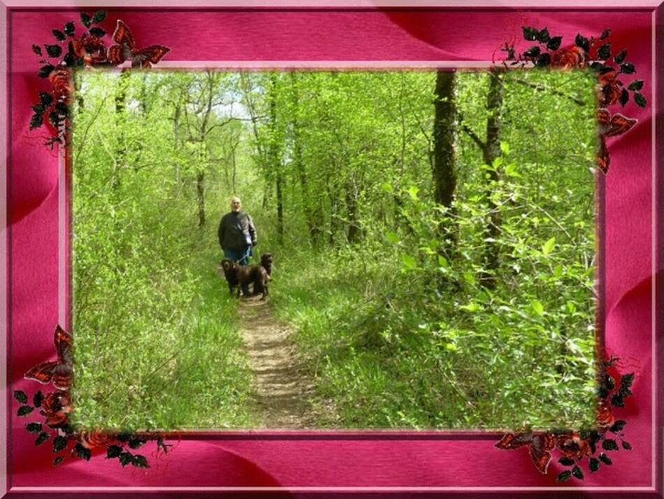 Balade dominicale en forêt.