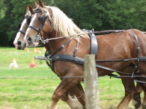 Fête du cheval et de l'attelage Hesmond