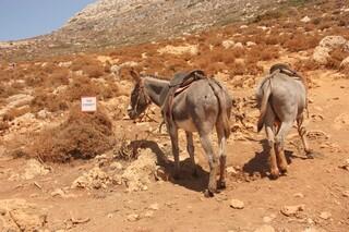 Taxi Donkey