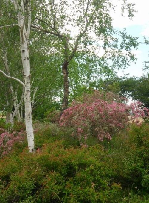 Vernioz. Le jardin du bois marquis.