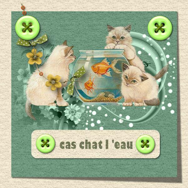 le cas chat l eau hihi