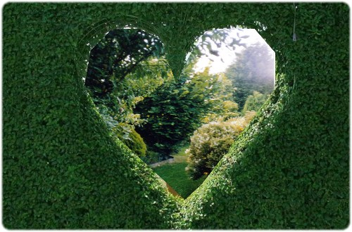 Au coeur de mon jardin 17