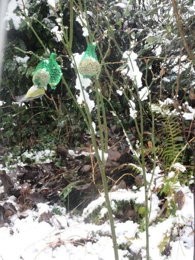 suite de la neige