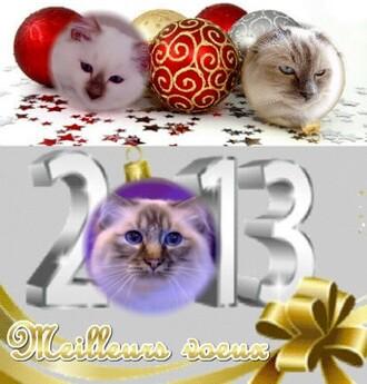 ► Meilleurs vœux 2013