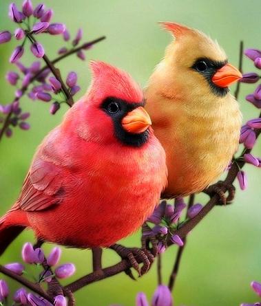 tubes birds