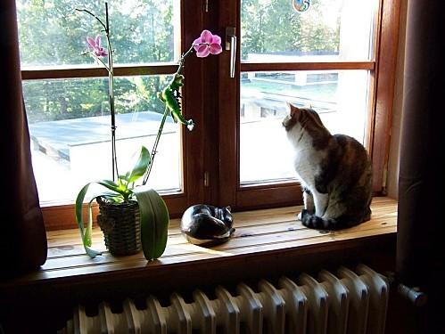 Mousse et l'orchidée 29 aout 2011