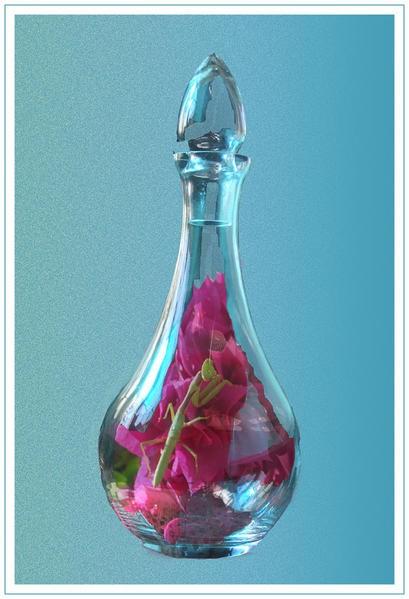mante religieuse dans carafe en verre