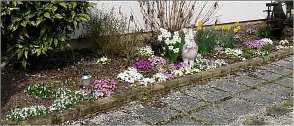 fleurs-mars-2011--1-.jpg