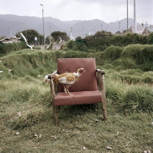 09 - Les poules du monde