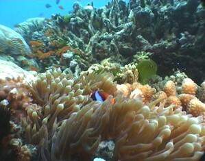 Plongee-Mickaelmas-Cay-0--39-.jpg