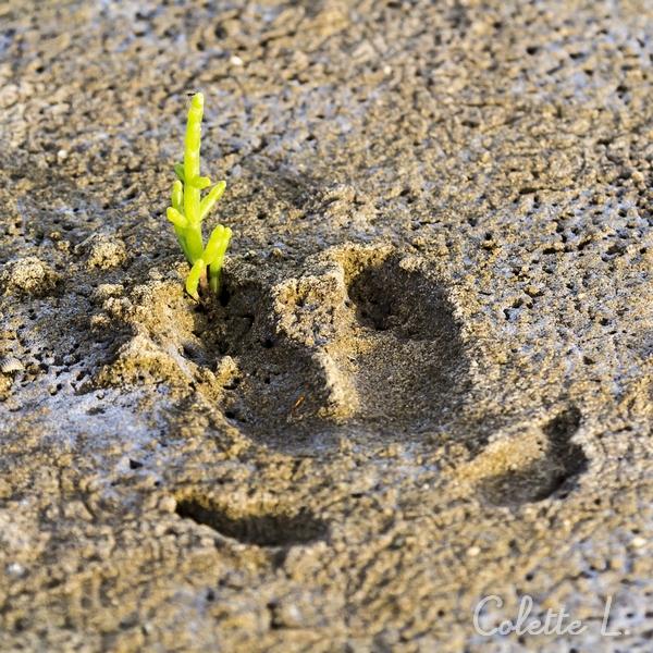 Laisser son empreinte sur le sable humide