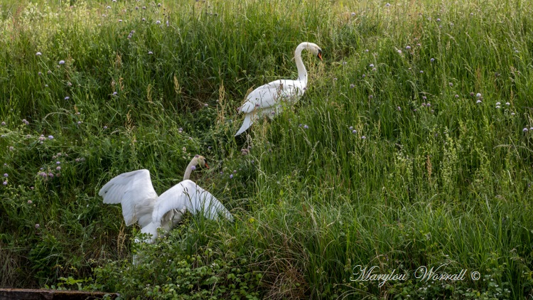 Souffelweyersheim (67) : Balade dans la nature