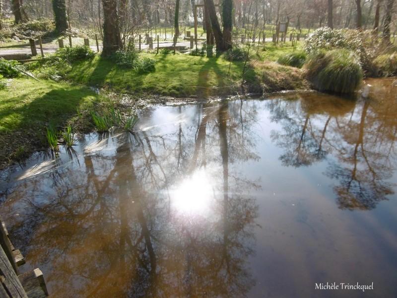 """Une balade à """"mon"""" Lac de LEON (40), le 23 février (suite n° 2 et fin)..."""