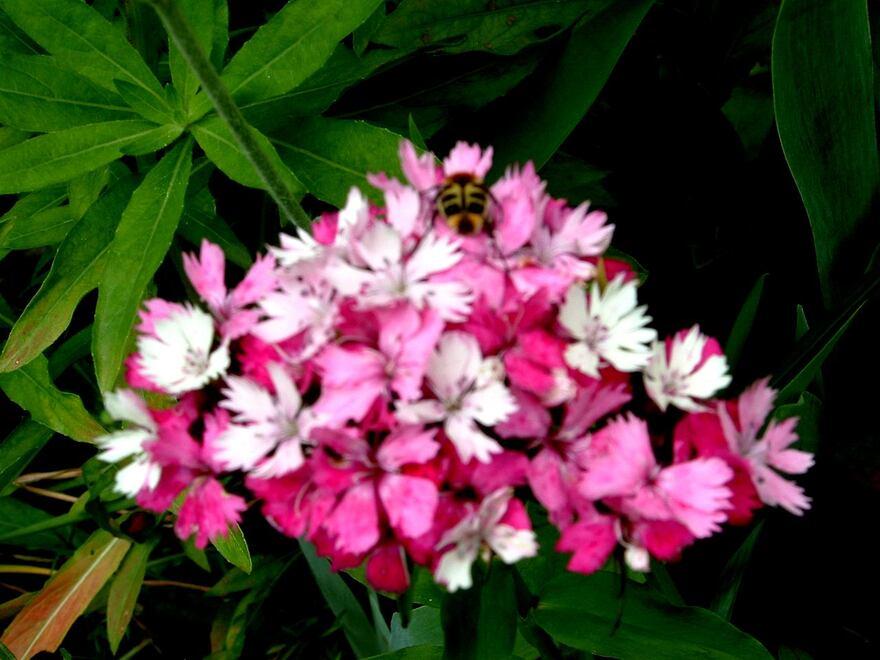 Le rendez-vous au Jardin , méli-mélo et gros plan