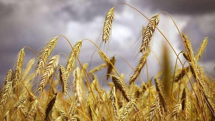 Top 15 des céréales essentielles à notre alimentation