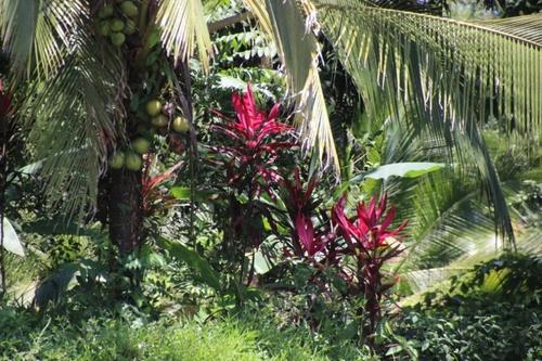 Tortuguero (Costa Rica)