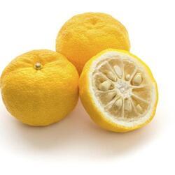 le citron chinois où japonais (Yuzu)