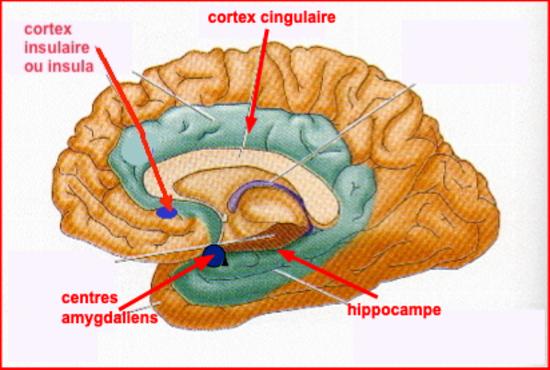 Puis-je maîtriser mon cerveau ?