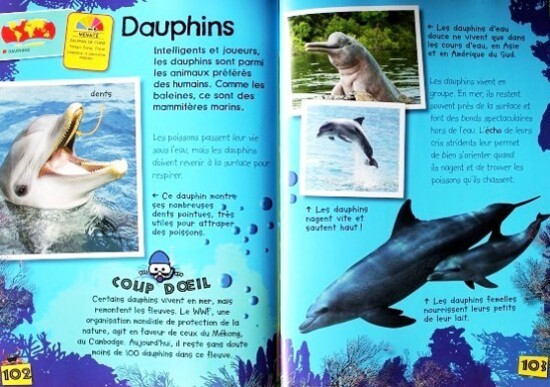 Mon-guide-des-animaux-sauvages-9.JPG