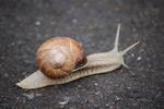 go, go, l'escargot...