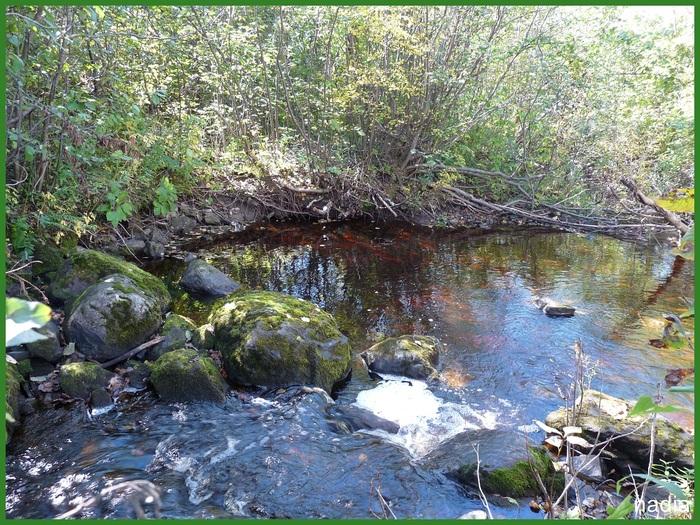 Paysages dans la forêt.