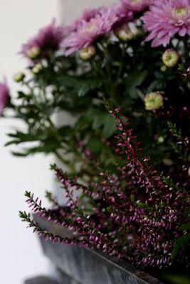 Jardinières - Automne 2014