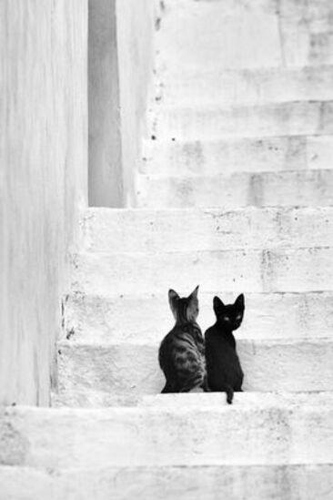18 - Les chats deux par deux