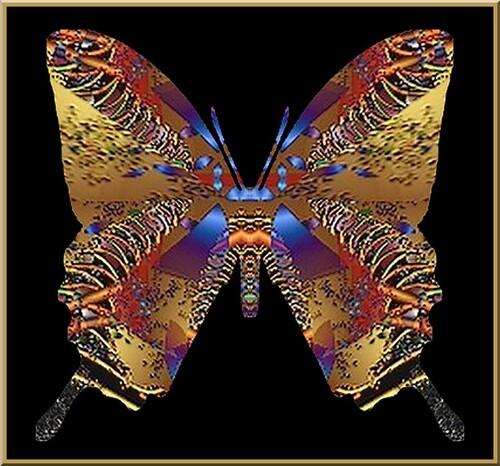 Test 1314 Butterfly création de M . Georges