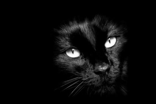 chat-dans-le-noir.jpg
