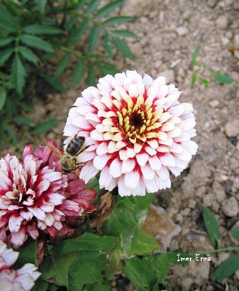 Fleurs-1103.JPG