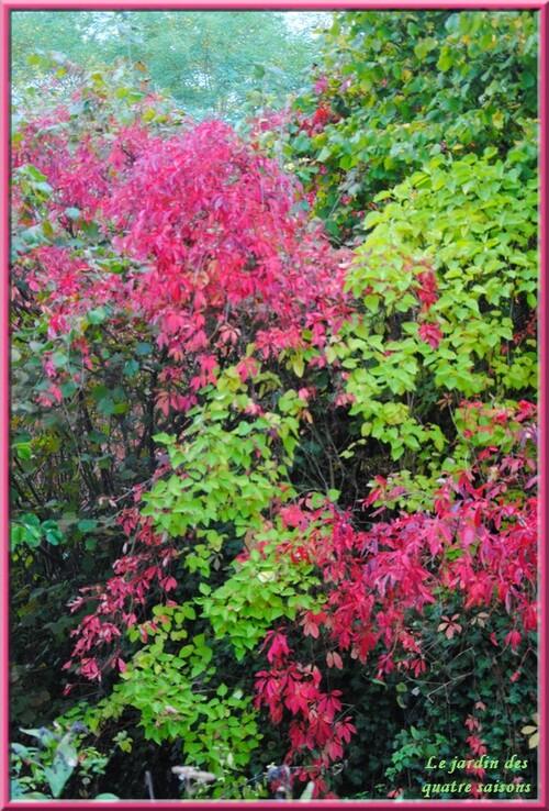 Photos d'automne 2ème série