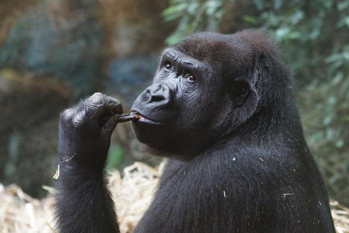 Cette guide de zoo a révélé 16 faits sur les animaux que vous ne savez pas, et on en veut d'autres