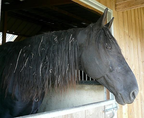 La-maugerie--Cheval-noir-11-10-10-104.jpg