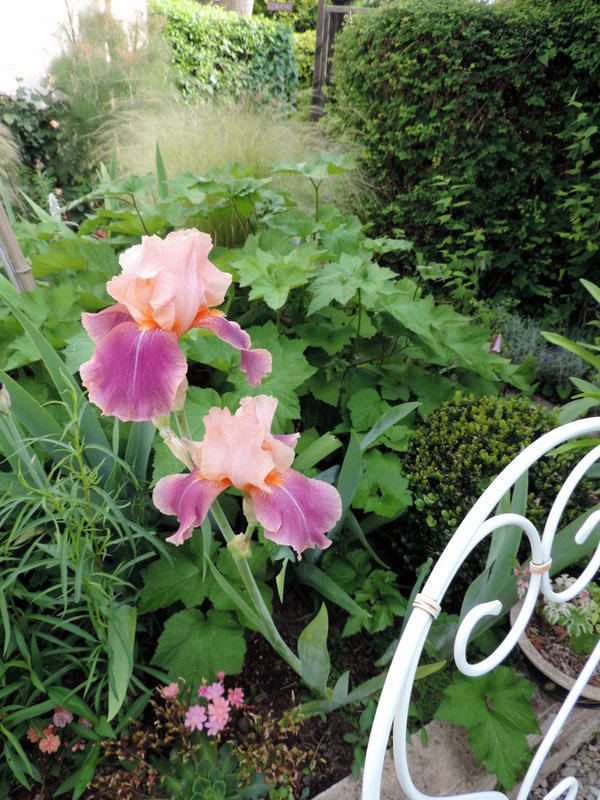 Fleurs de Mai et début juin, au jardin