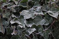 Images hivernales de saison