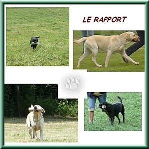 LE-RAPPORT.jpg