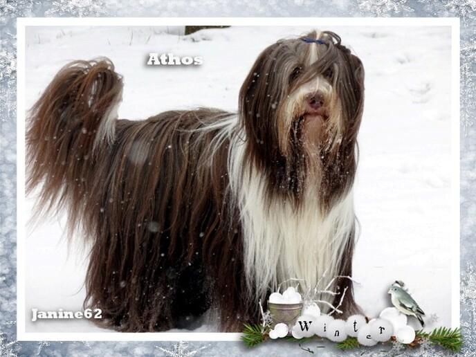 ♥ Athos -  Année 2013 - photos 1er semestre ♥