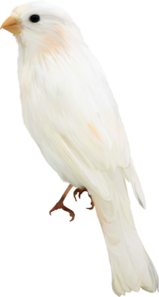 Tube oiseaux du 01/05