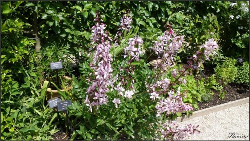 Jardin de l'odorat (4)