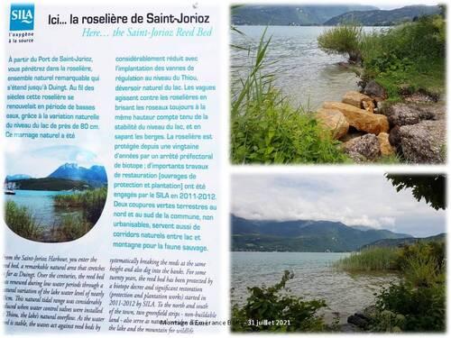 Saint-Jorioz et sa roselière