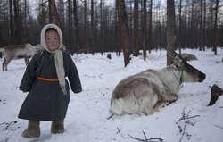 Mongolie : des éleveurs de rennes interdits de chasse au nom de la conservation