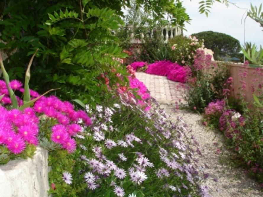 C'était ce printemps - Allée de rose vêtue - Votre jardin resplendit au printemps ? Montrez-le !