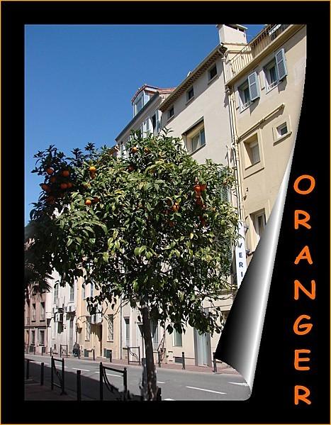 oranger 5jjpg