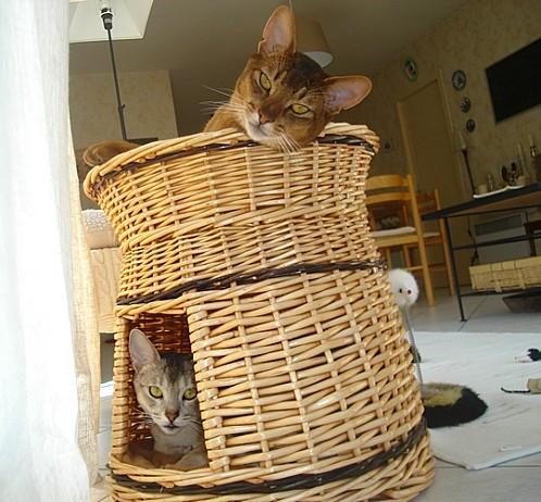 L'HLM à chats !!!!!