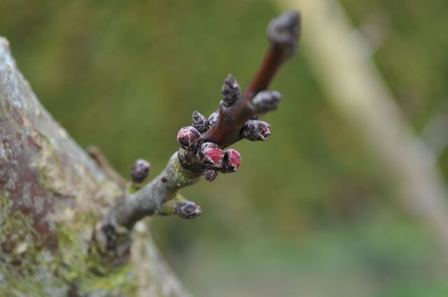 Premier mars, aux portes du printemps ... et ça fleure bon