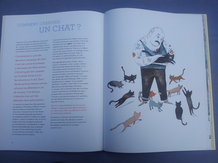comment caresser un chat