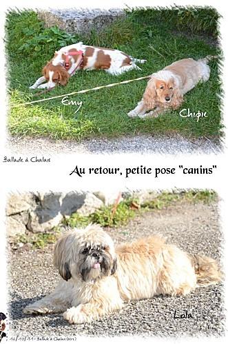 2011_16-10-chalais--11-.jpg