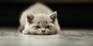 Empoisonnement chez le chat : les traitements